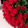 Trandafiri Roșii 50-60 cm
