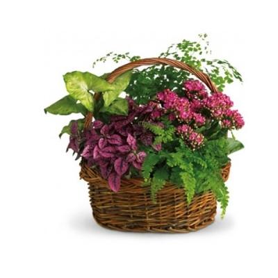 """Coșuleț """"Pădur"""" din flori de cameră"""