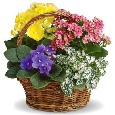 """Coș """"Treiculori"""" cu flori de camera."""