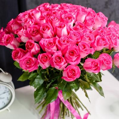 Trandafiri Fuchsia 80-90 cm 101 buc