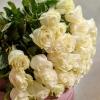 Trandafiri Albi 80-90 cm