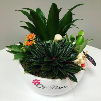 Aranjament din Plante Nr. 1