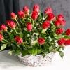 Coș din 51 trandafiri roșii