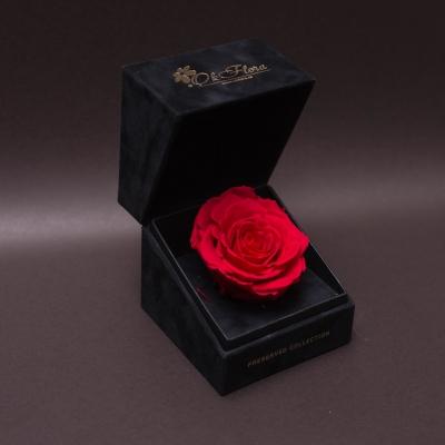 Trandafir Criogenat Roșu Mare în Cutiuță de Catifea