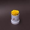 Trandafir Criogenat Galben în MIni-Cutie Albă
