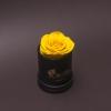 Trandafir Criogenat Galben în Mini-Cutie Neagră