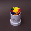 Trandafir Criogenat Rainbow în Mini-Cutie Albă