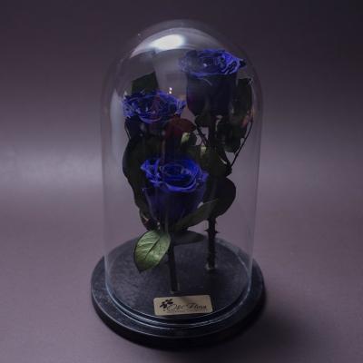 3 Trandafiri Criogenați Albaștri în Cupolă Mare