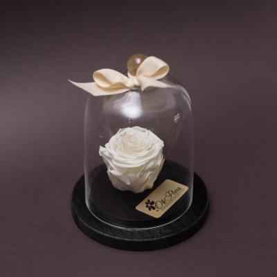 Trandafir Criogenat Alb în Cupolă Mică