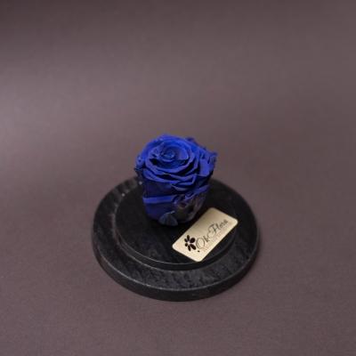 Trandafir Criogenat Albastru în Cupolă Mică