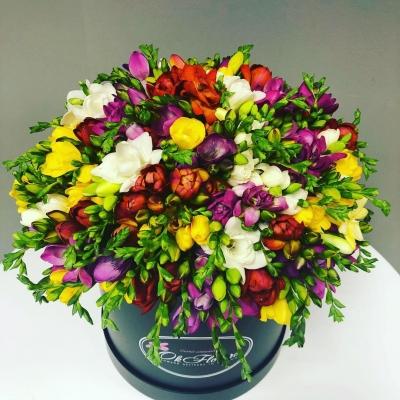 Cutie de Lux cu Frezii Multicolore