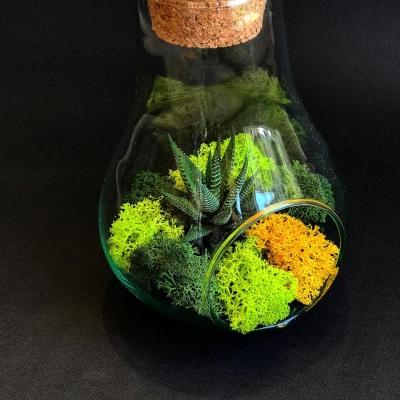 Terrarium în Vas Pară