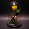 Trandafir Criogenat Galben în Cupolă Mare