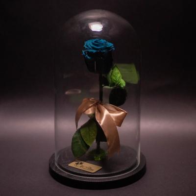 Trandafir Criogenat Turcoaz în Cupolă