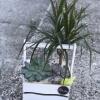 Aranjament din Plante Nr. 2