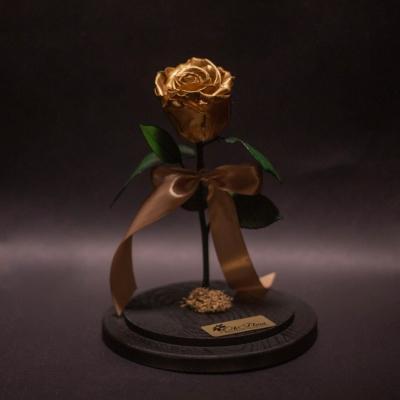 Trandafir Criogenat Golden în Cupolă Mare