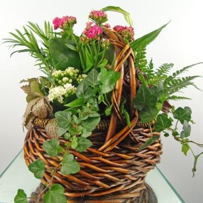 """Coș """"Begonie în pădure"""" cu flori de cameră"""
