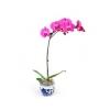 Orhidee roz în ghiveci cu 1 creangă