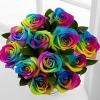 Trandafiri Rainbow